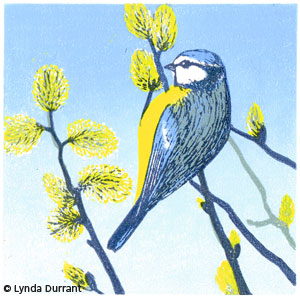 Bluetit linocut illustration