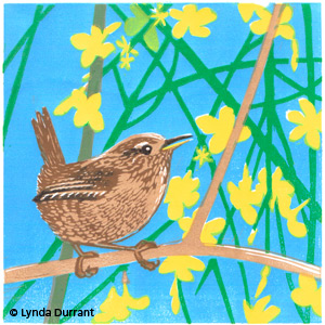Wren in Winter Jasmine