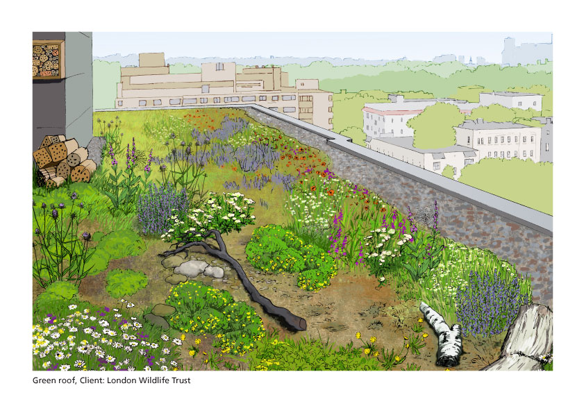 Green roof illustration