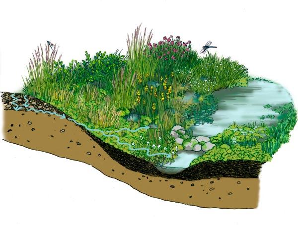 bog habitat diagram