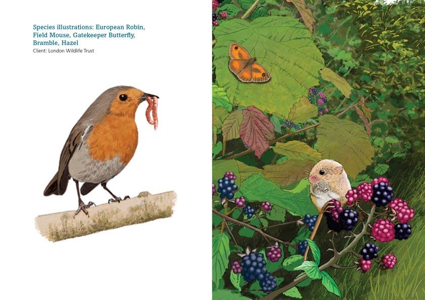 Robin and hedgerow