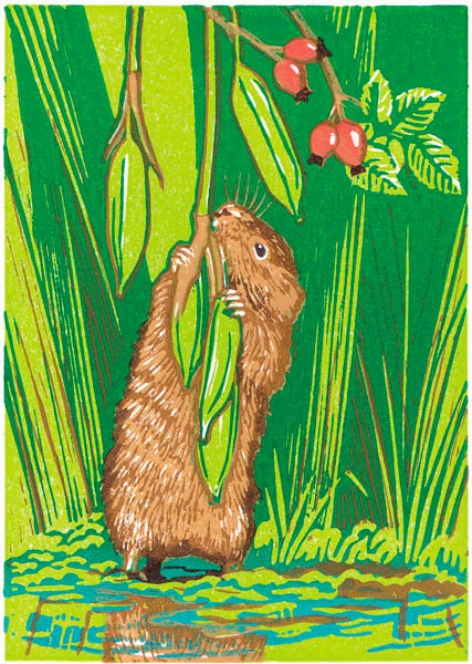 Water vole and rosehips