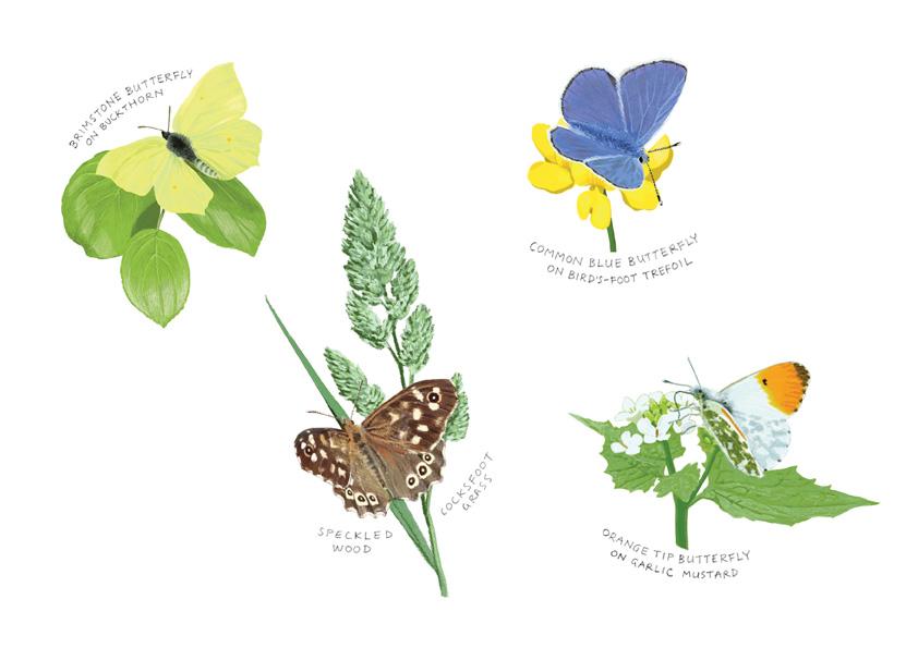 Butterflies with hand written captions